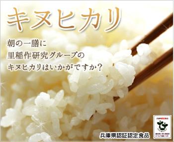 匠の逸品 特別栽培米 キヌヒカリ・玄米