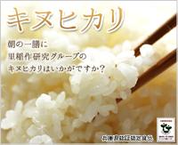 匠の逸品 特別栽培米 キヌヒカリ(減農薬米)